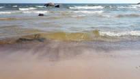 Ilouutisia uimareille: laajat sinilevälautat häipyivät Suomenlahdelta