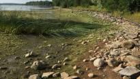 Vuoksen vedenkorkeus on historiallisen alhaalla – vesiraja on lähes sadan metrin päässä normaalista
