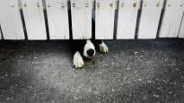 Kuuma kesä toi eläinsuojeluun kiireen ja kaaoksen – tuuletusikkunoista tippuneita kissoja, väärin lenkitettyjä koiria ja loputtomasti huolestuneita puheluita