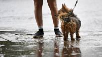 Sunnuntaina ukkostaa ja sataa – ensi viikko tuo kimaran erilaisia säätyyppejä Suomeen