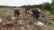 Metsä sileäksi kerralla vai puita rahaksi tarkoin valikoiden? Kansalaisaloite avasi keskustelun suomalaisesta metsätaloudesta: