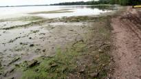 Herätys: Kuumuus koetteli järvien rantoja, suomalaiset kulkevat kolanjuojina valtavirtaa vastaan ja Filippiinien Duterte jahtaa vastustajiaan