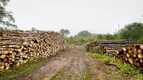 Kuiva ja lämmin kesä suosi puun korjuuta – hakkuut ja ostot ennätystasolla