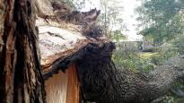 Syysmyrsky riepoi etenkin Poria – tuhansia sähköttä, kaatuneita puita, pienkerrostaloista kattopellit irti