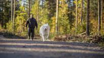Вопреки распространенному заблуждению, наличие собаки не помогает мужчинам защититься от диабета