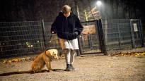 Начался сезон гриппа у собак – местами выявлены вспышки эпидемии вольерного кашля