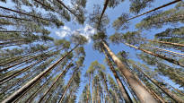 Ilmastopaneeli: Ennusteet metsien hiilinielun kehittymisestä poikkeavat valtavasti toisistaan