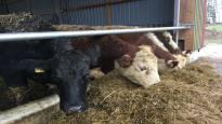 MT: Osa maatiloista turvautuu pikavippeihin rahapulansa paikkaamiseksi