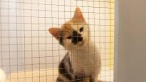 Äärimmäisen harva siruttaa kissansa, ja sen takia lemmikki ei välttämättä ikinä löydä kotiin –