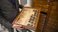 Mannerheimin isoisän kovakuoriaiskokoelma hätkähdyttää kauneudellaan – Kellarissa keskellä Helsinkiä lepää yhdeksän miljoonaa hyönteistä