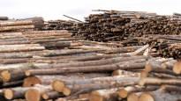 Metsä Group laskee Kemin biotuotetehtaan kannattavuutta – puun saatavuus ja logistiikka tärkeässä roolissa