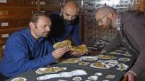 Italialaisesta marmorikaivoksesta löytynyt dinosaurus oli varhaisen aikansa odottamaton jättiläinen