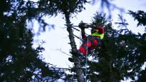 Hankalimmat puut kaadetaan pala kerrallaan latvasta alaspäin – Kim Sorvarille kiipeily sahan kanssa kuusen latvassa on arkea