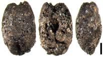 Pienillä viljanjyvillä on kerrottavaa: Suomessa ryhdyttiin viljelemään maata jo viisi vuosituhatta sitten