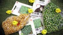 Samasta pussista popcornia ja pääsiäisruohoa – perinteinen rairuoho on saanut haastajia