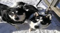 Полиция приняла домашних питомцев за бродячих собак и застрелила их – прокурор не стал выдвигать обв ...