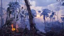 Финские политики обеспокоены пожарами в лесах Амазонии