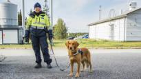 Таможенная собака Айно унюхала рекордное количество запрещённых продуктов