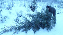В лесах северной Финляндии можно купить елку смартфоном