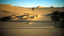 Финская энергетическая компания St1 хочет превратить пустыню в лес – Эксперимент в Марокко начнется  ...