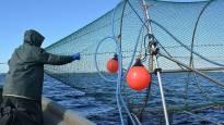 Kalastajilta erittäin harvinainen hakemus Satakunnassa – haluavat varata merialueen vain ammattikalastuksen käyttöön