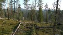 Nainen katosi Urho Kekkosen kansallispuistossa