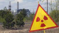 Suomalaistutkimus: Tšernobyl muutti myyrien suolistobakteereita  – tulevaisuudessa voidaan tutkia myös ihmissuolistoja