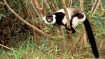 AFP: YK:n raportti varoittaa sukupuuton uhkaavan miljoonaa kasvi- ja eläinlajia