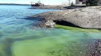Негативные последствия тепла – сине-зелёные водоросли появятся в водоемах раньше обычного