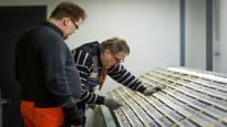 Natura-alueella kairaava Mawson alkaa selvittää tarkemmin Ylitornion kulta- ja kobolttiesiintymää
