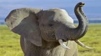 WWF: Tansania suunnittelee valtavia metsähakkuita luonnonsuojelualueella