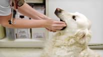 Kilpailu eläinlääkäribisneksessä kiristyy – lemmikinomistajalla on nyt enemmän valinnanvaraa kuin koskaan