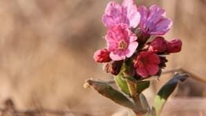 Lehtoimikkä on ainoa imiköiden suvun Suomessa luonnonvaraisena kasvava kasvi,  ja tämä oli Kuusjoen Impolassa 26. huhtikuuta 2009.