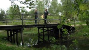 Edvininpolun silta