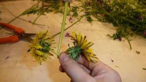 Varsi kiepautetaan kukkien välistä