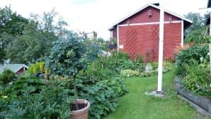 puutarha kukkaloistossa