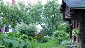 vanha aitta, puutarhaa