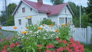 kesäkukkia, taustalla talo ja puuaita