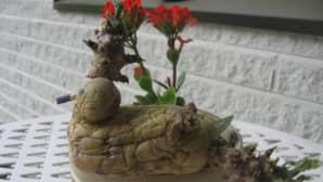 Kuvassa vanha, itänyt peruna, josta on tehty vesilinnun muotoinen koriste.