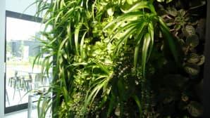 Viherkasveja seinässä