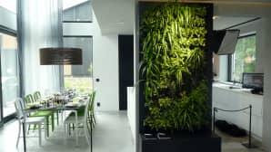 Ruokailutila ja viherkasveja seinässä