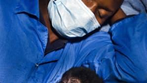 Tasankogorillan poikanen nukkuu hoitajansa vierellä.