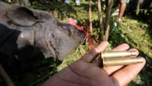 Riistanvartija esittelee luoteja, jollaisilla salametsästäjät ampuivat uhanalaisen sarvikuonon.