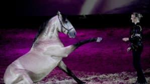 Nainen esiintyy hevosensa kanssa hevosshow'ssa.