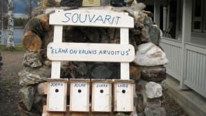 Souvareiden linnunpönttö-rivitalossa oli menneenä kesänä kirjosieppo rakentanut kotinsa Lassen rivariin.