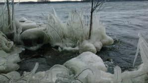 Jäätyneitä oksia järven rannalla