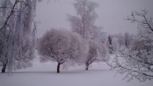 Luminen puistomaisema