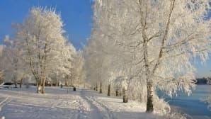 Pyhäjärven rannan lumisia puita Tampereella