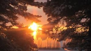 Aurinkoa puiden lomassa