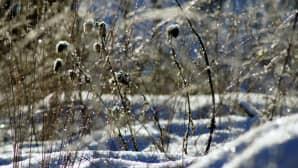 Talventörröttäjiä